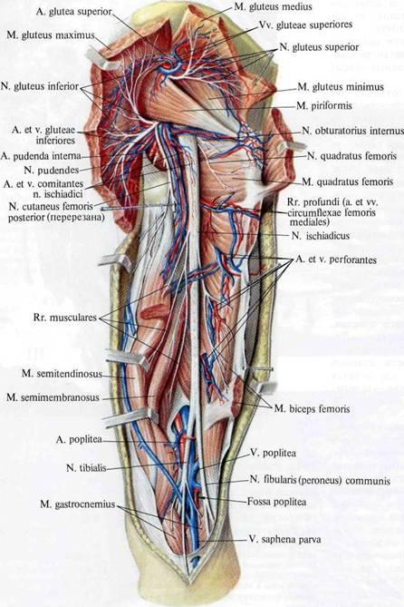 peroneaalne neuropaatia ja kaalulangus metaboolsed sunergia kaalulanguse ulevaated