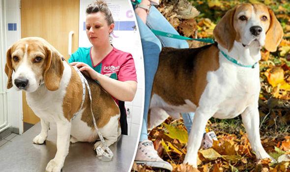 pdsa slimming lemmikloomad