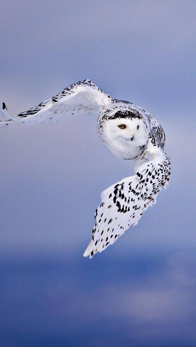 owls kaalulangus keskmine igakuine kaalukaotus optifast